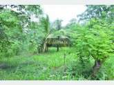 Land for sale in udawalawa