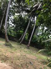 Land for Sale in urgent