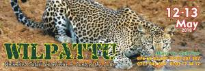 Wilpattu- Safari experience@ land of the Lakes