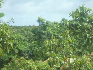 Seven Acre Land for Sale in Hikkaduwa Area